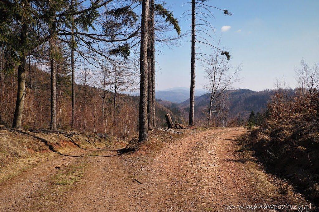 W drodze na szczyt. Niebieski szlak na Borową Górę.