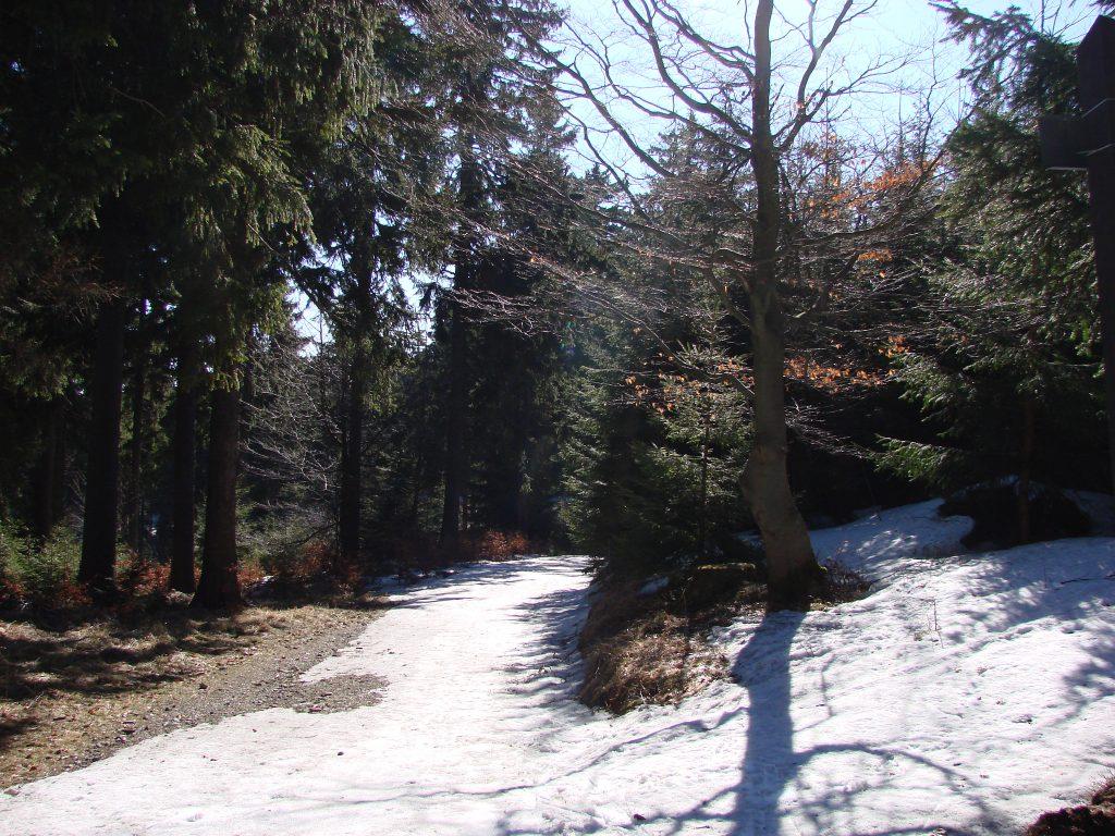Początek zielonego szlaku na Orlicę