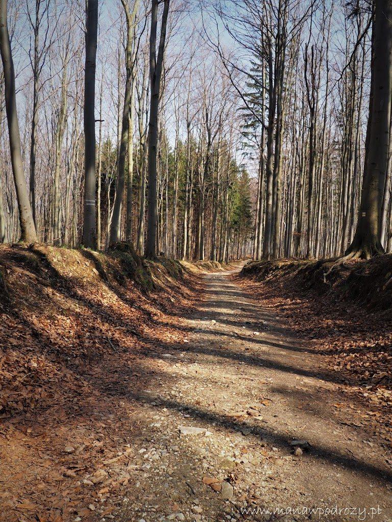Żółty szlak z Horni Hostice na Borówkową Górę