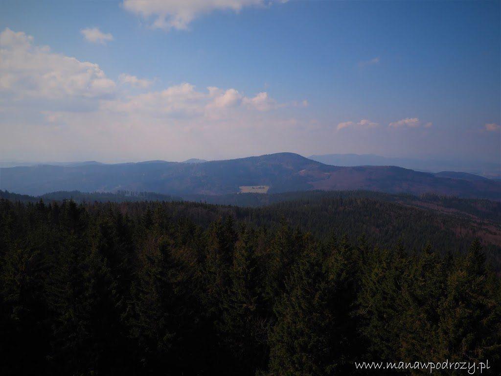 Widok na Jawornik Wielki z Borówkowej Góry