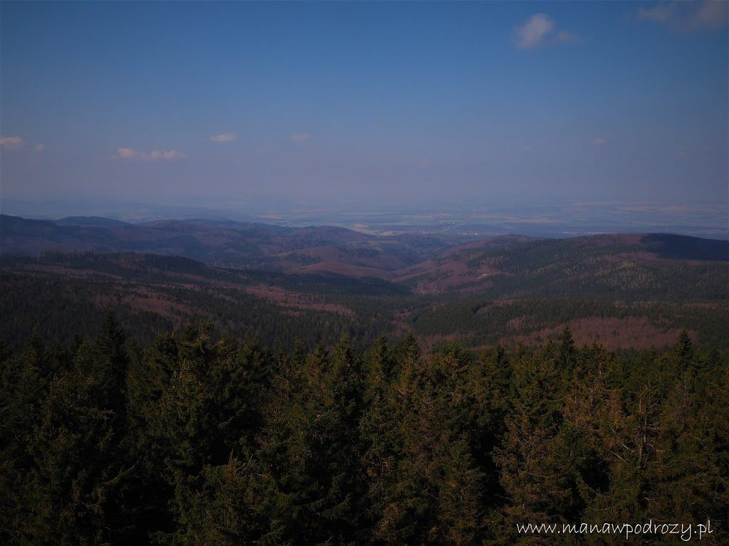 W stronę Przedgórza Paczkowskiego widok z wieży widokowej na Borówkowej Górze