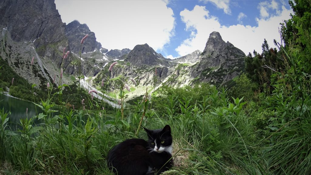 Kot nad stawem
