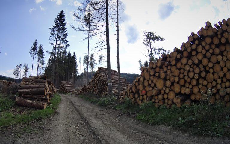 Pod Lysym Vrchem trwa intensywna wycinka drzew