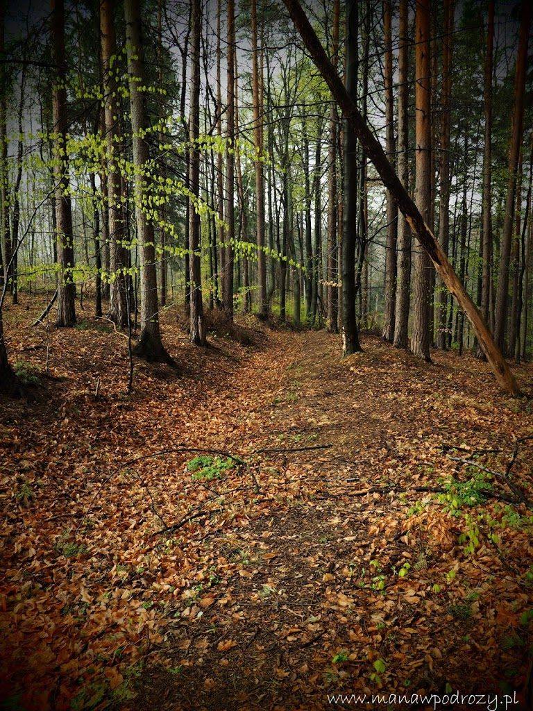Park Zdrojowy w Głuchołazach