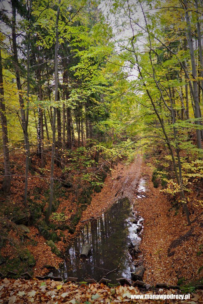 Tajemniczy kanał w buczynowym lesie