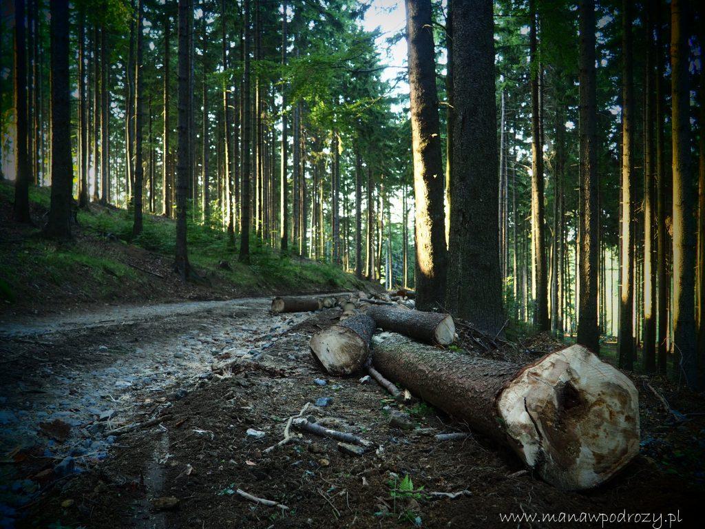 Leśne ścieżki na żółtym szlaku