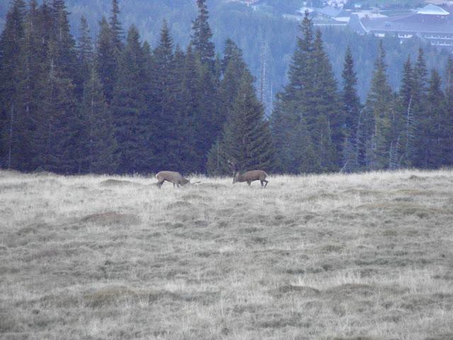 Zaobserwowane przez nas jelenie