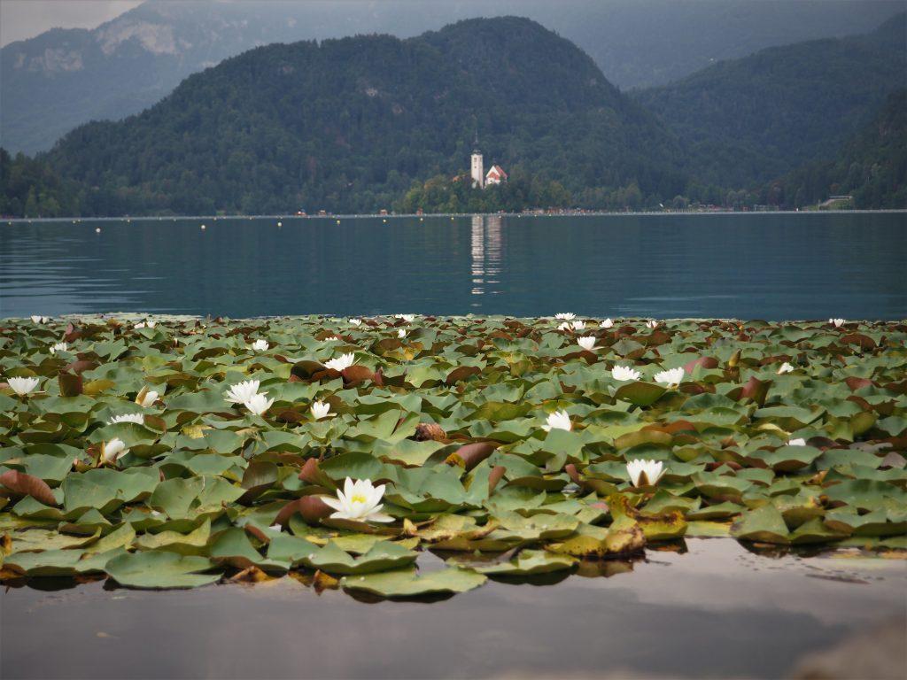 Jezioro Bled i Blejski Otok w tle