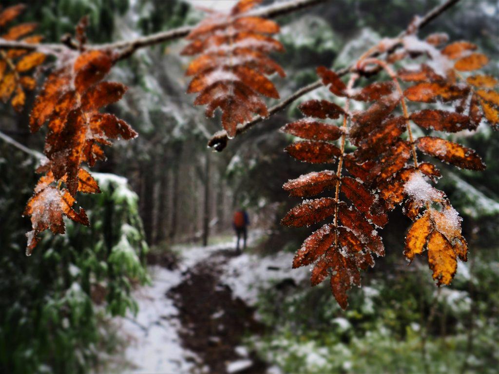 Jak jesień walczy z zimą