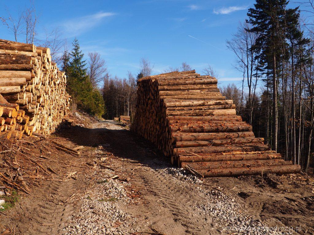 Sterty ściętego drzewa