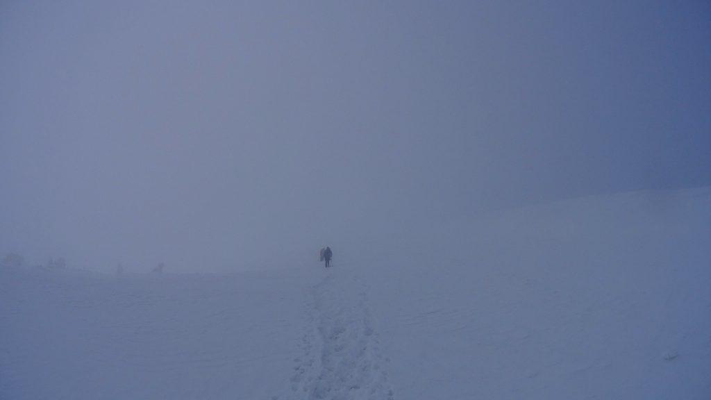 Gówniak w gęstej mgle