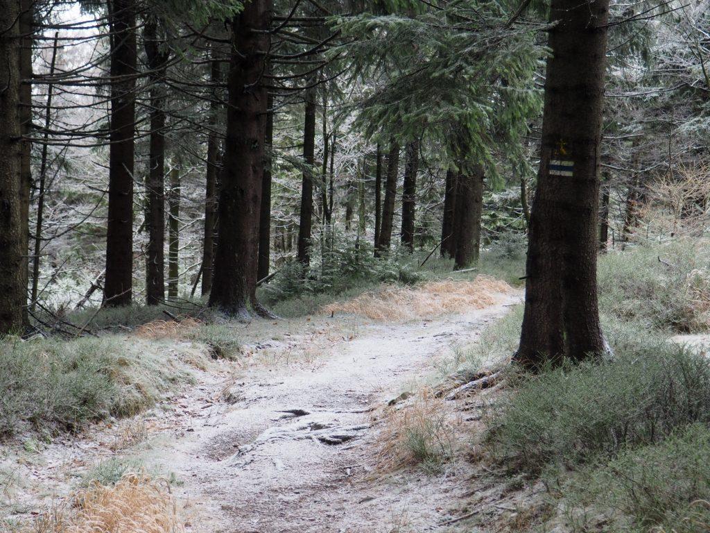 Leśna ścieżka na Jagodną