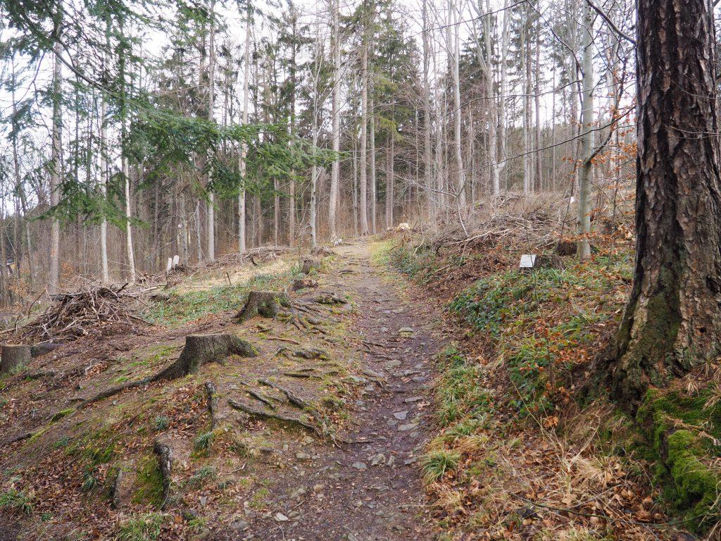 Szlak z Parku na Zlaty Chlum