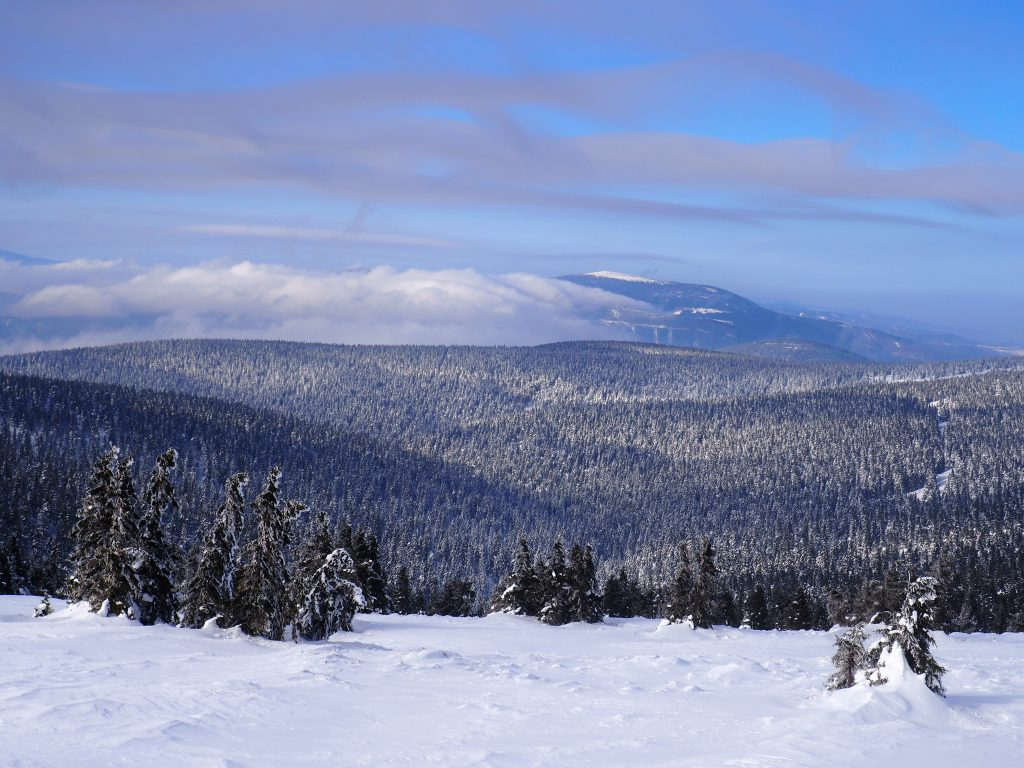 Widok w kierunku Śnieżnika
