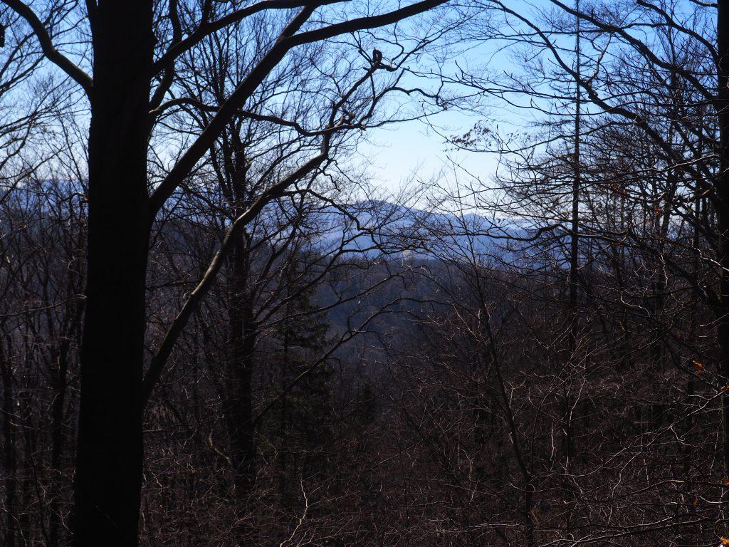 Ptasznik- widok ze szczytu