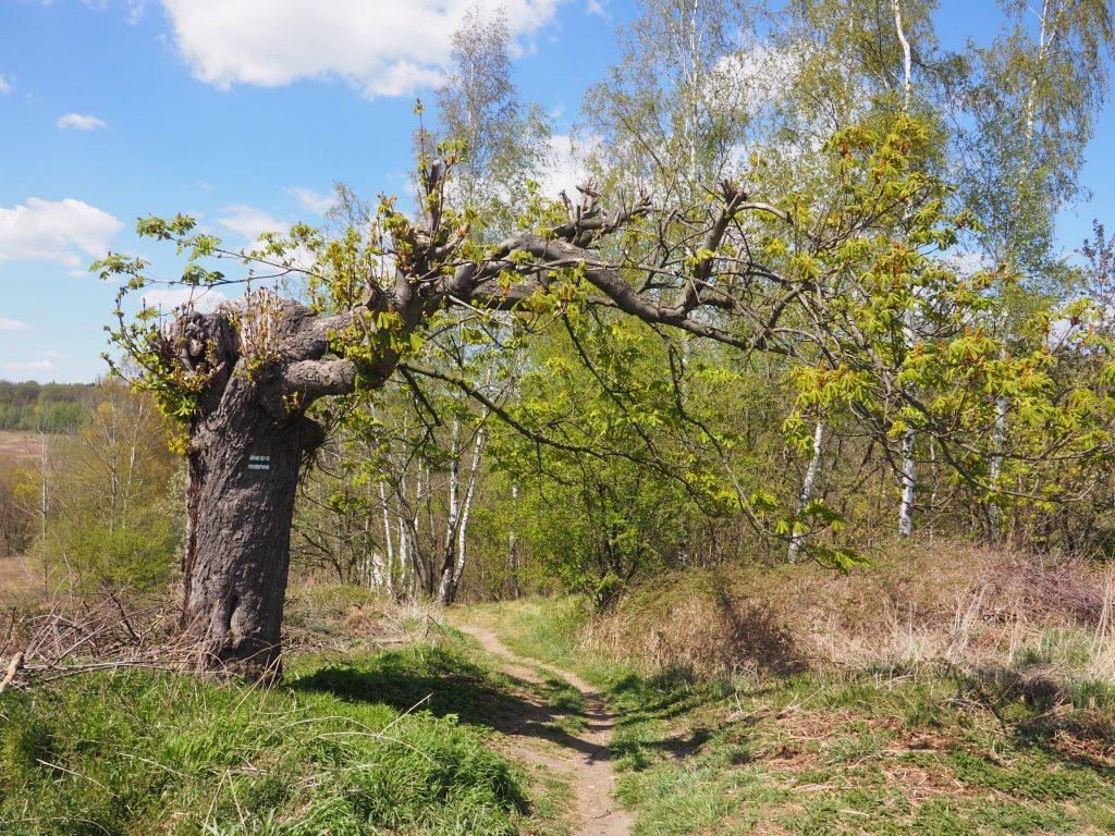 Na zielonym szlaku dojściowym do Ścieżki Hochbergów