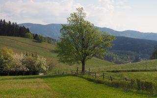 Na niebieskim szlaku, tuż przed wejściem na pastwisko