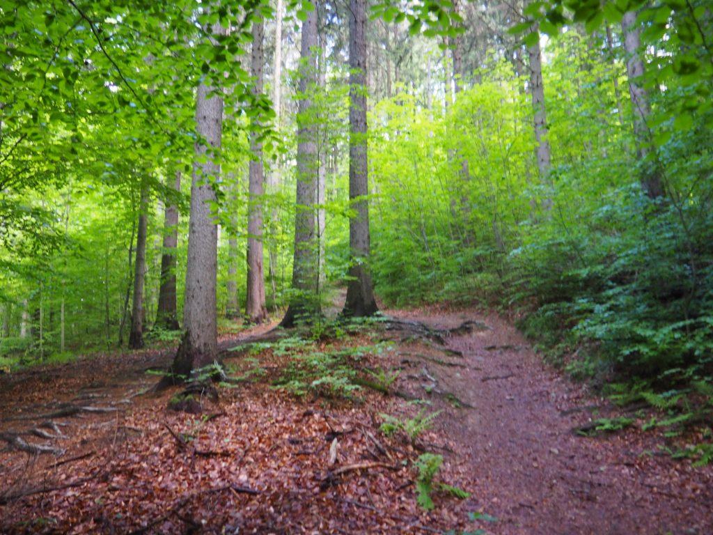 Buczynowy las- początek szlaku