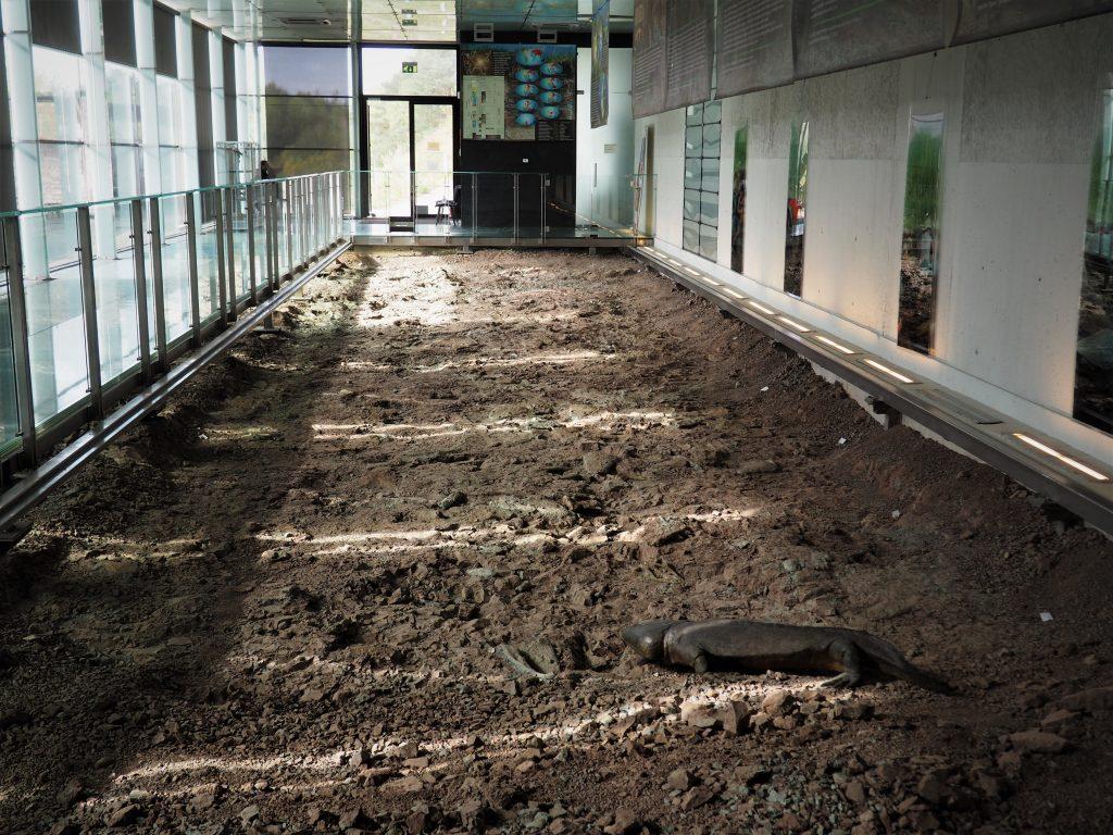 Wnętrze Pawilonu Paleontologicznego