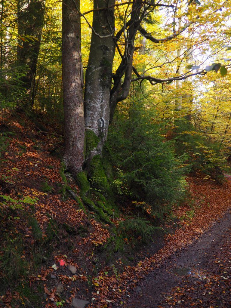 W końcu w lesie... na czarnym szlaku:)