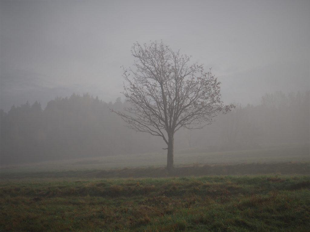 Zaczynamy we mgle... Klimat jest niesamowity!