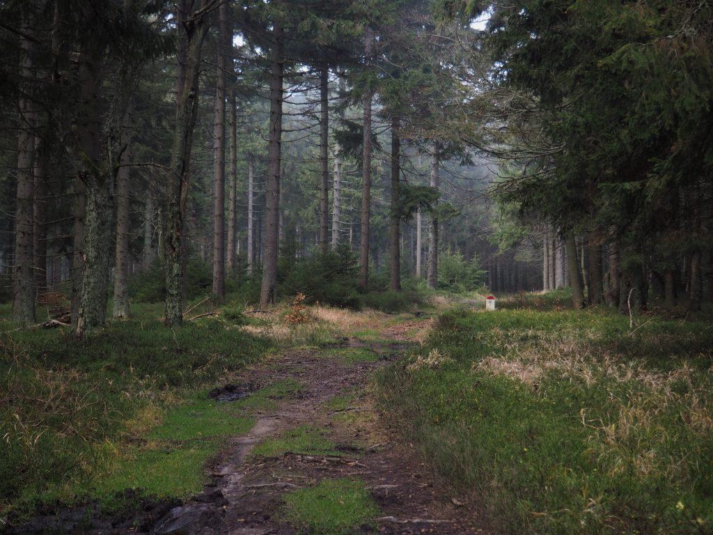 Na początek magia jesiennego lasu:)