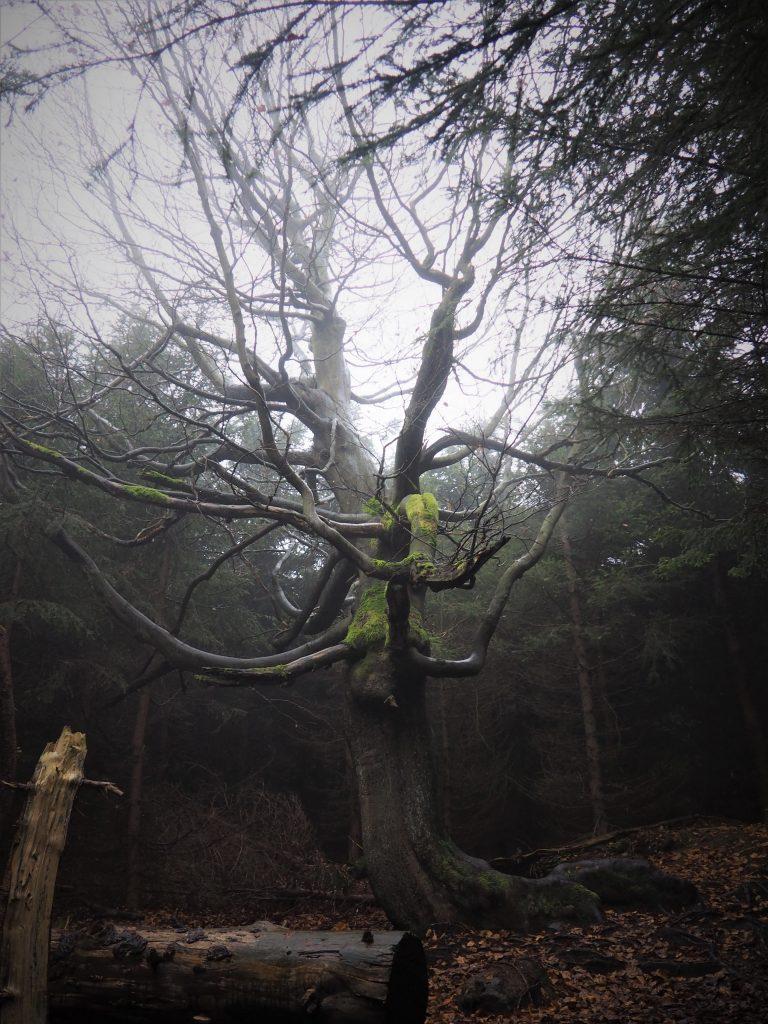 Obok tego drzewa trudno nie przejść obojętnie;)