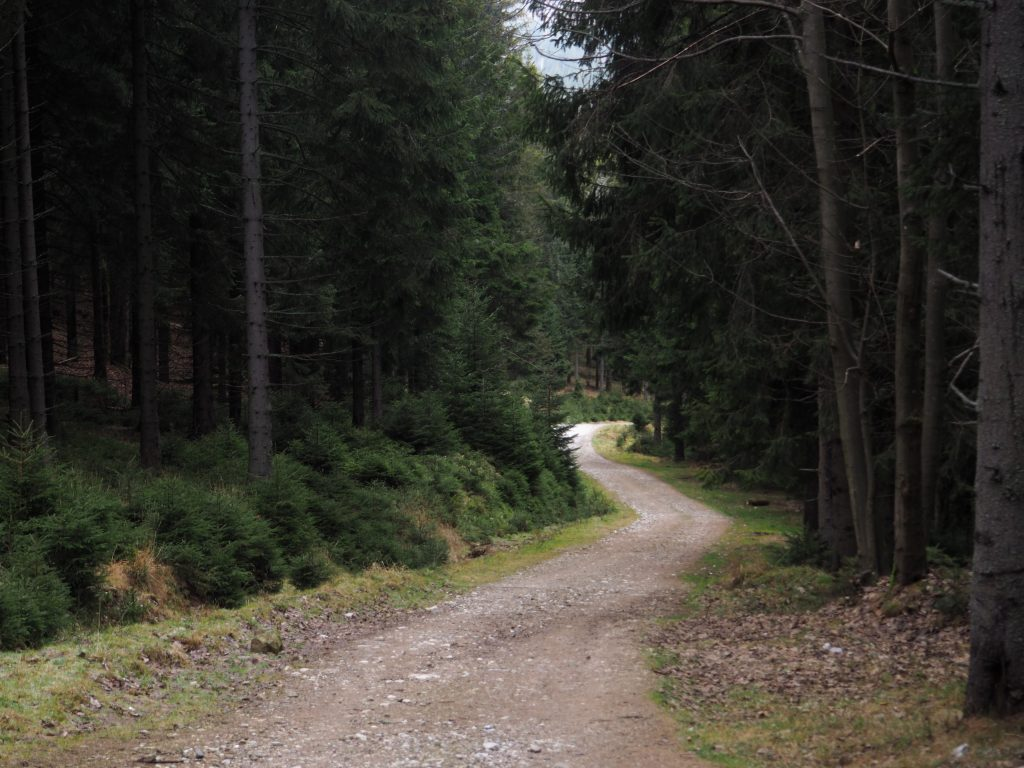 Początek zielonego szlaku na Kowadło