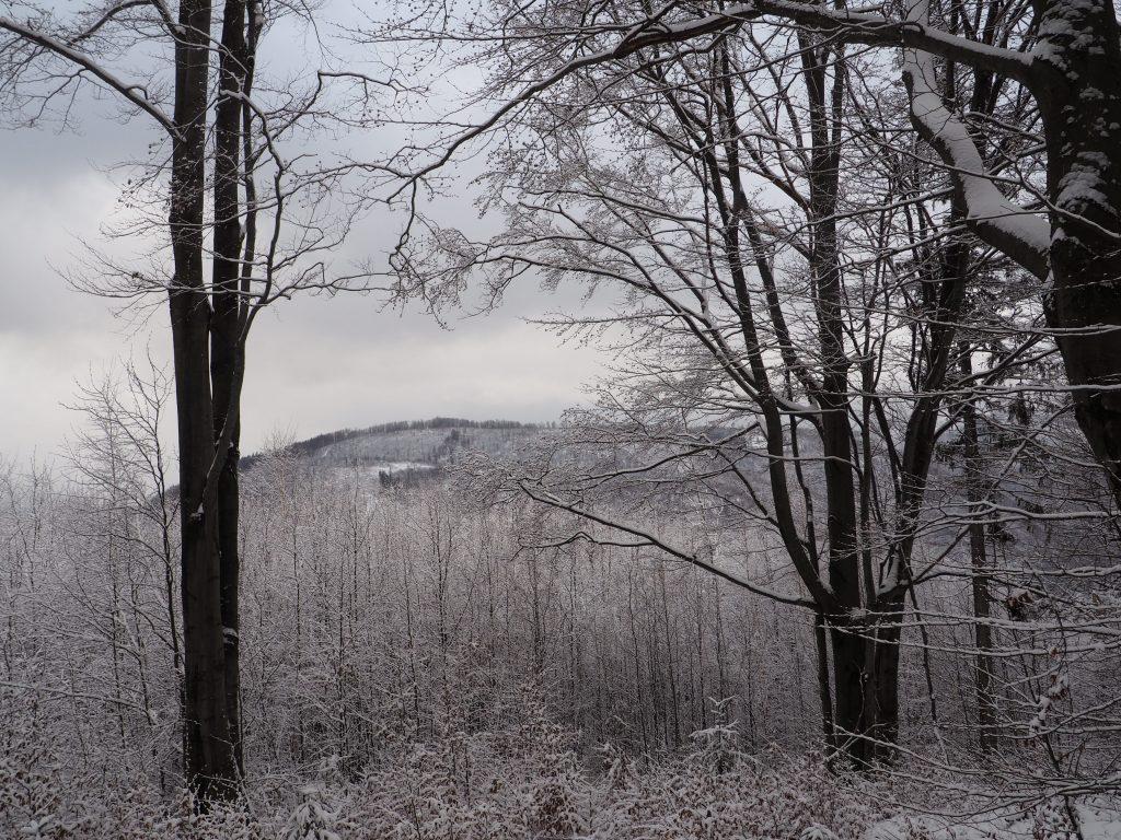 Widok z podejścia na Skrzyczne z Doliny Zimnika