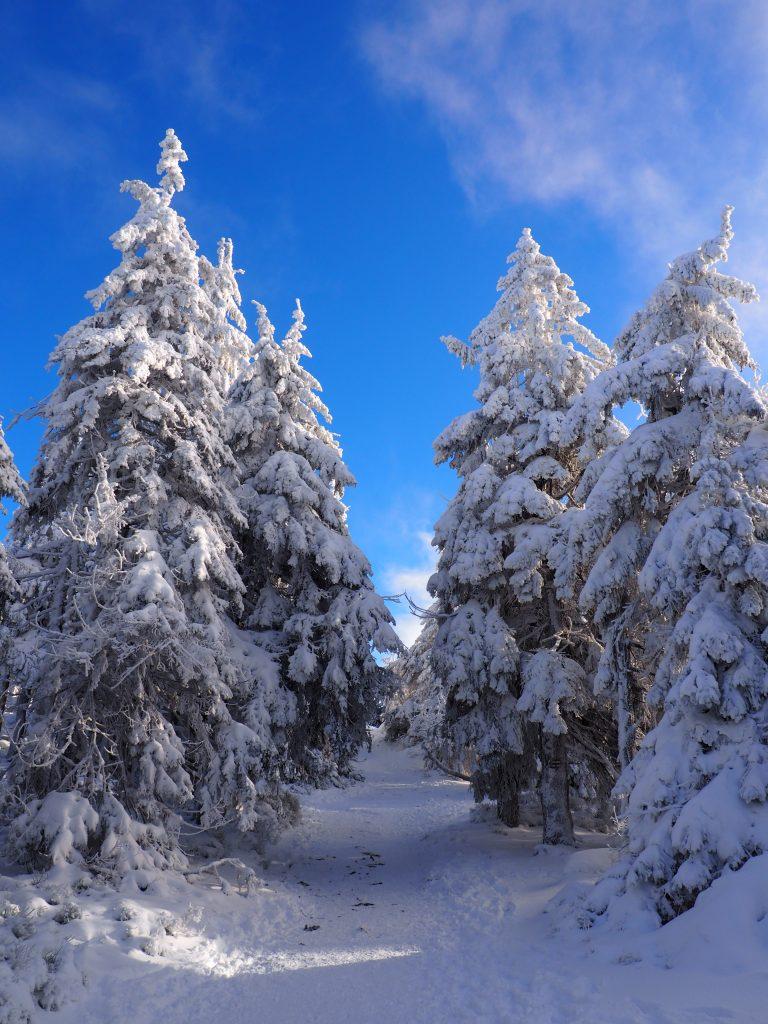 Malownicze krajobrazy w drodze na Śnieżnik