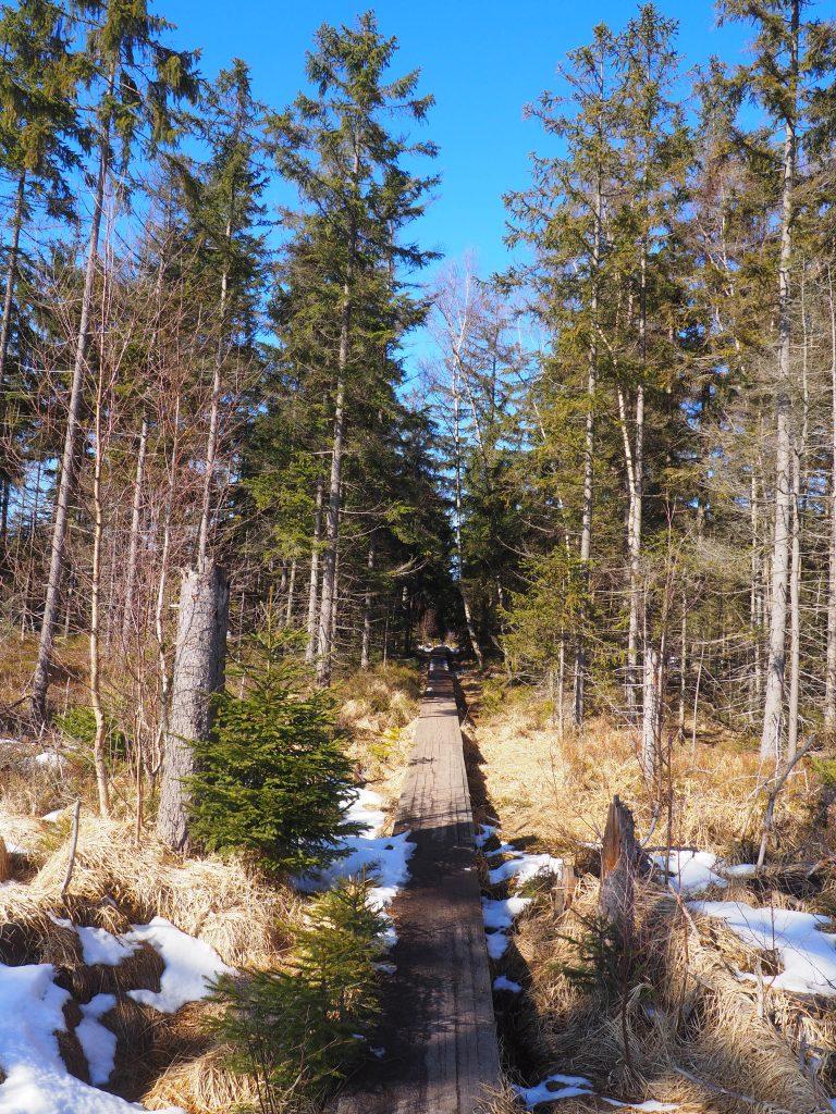 Przejście przez torfowisko po drewnianych podestach