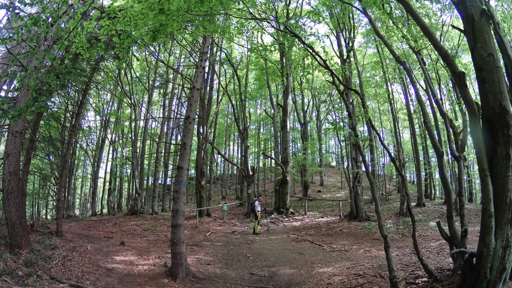Zółty szlak zaraz po wejściu do Bieszczadzkiego Parku Narodowego