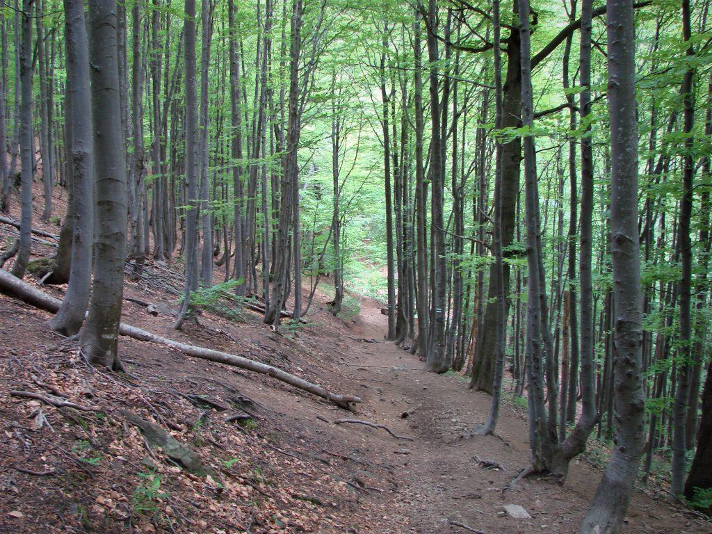 Leśny szlak do Bacówki