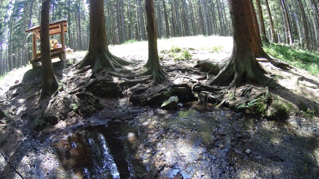 Brunatne potoki w okolicach Rejviz