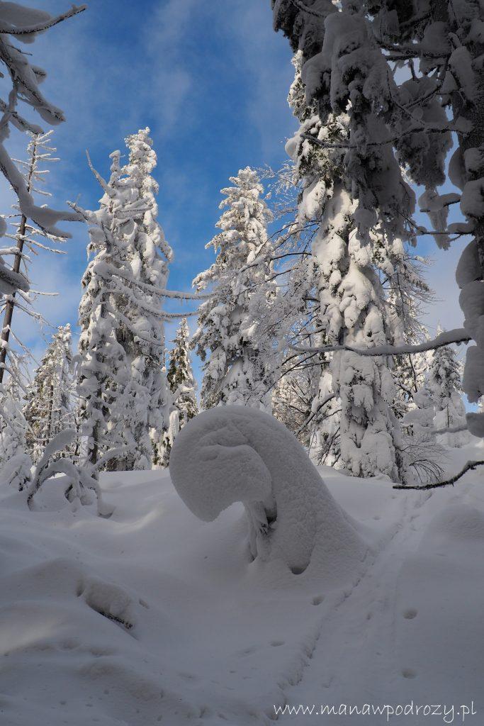 leśne śnieżne stwory