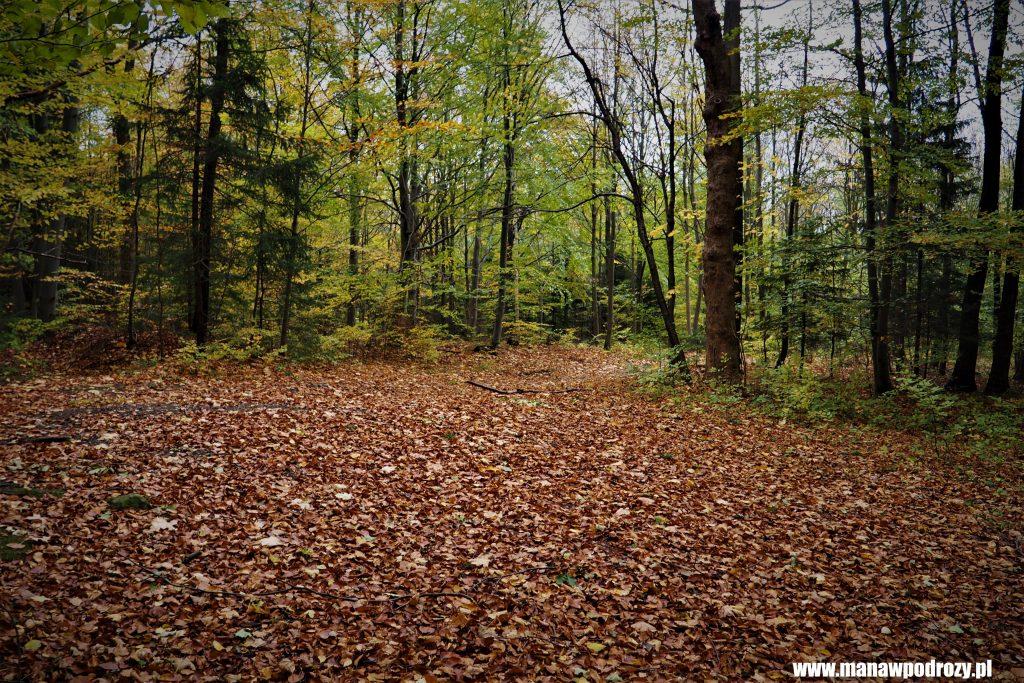 Szlak usłany jest jesiennymi liśćmi