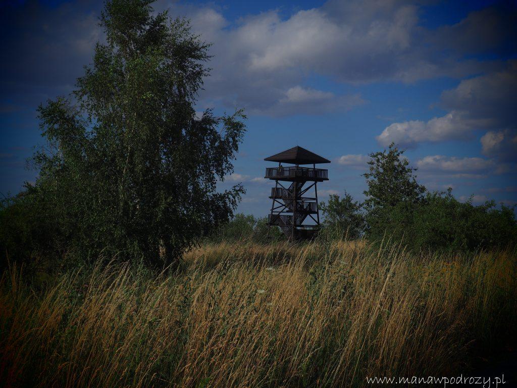 Wieża widokowa na Koziej Górze