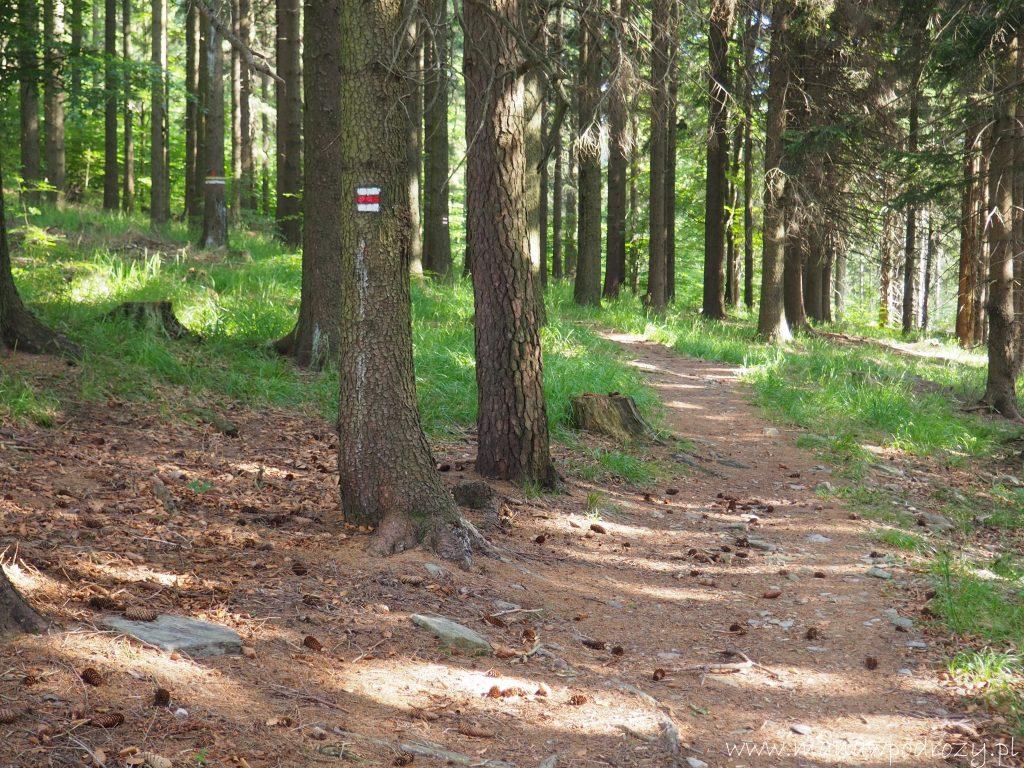 Leśna ścieżka w kierunku Czartowca