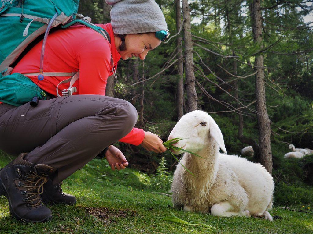 Owieczki na przełęczy były bardzo przyjaźnie nastawione:)