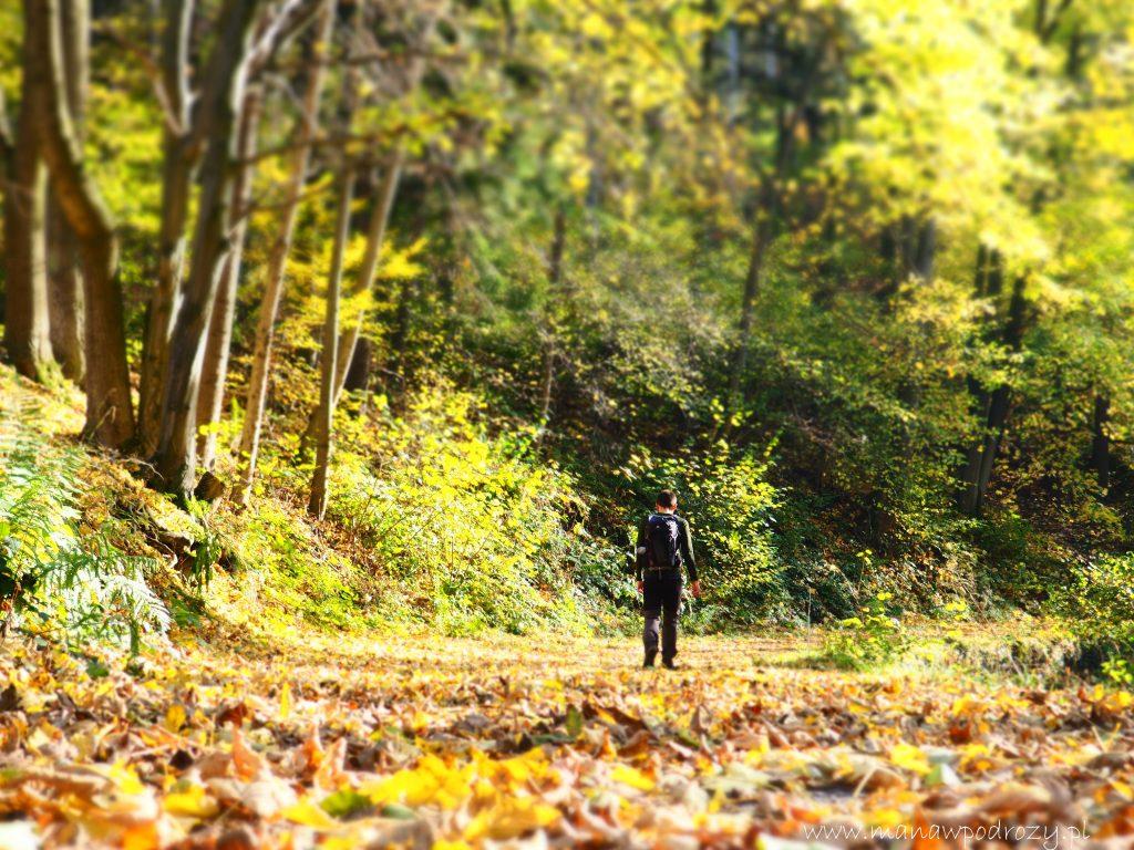 Na szlakach piękna jesień