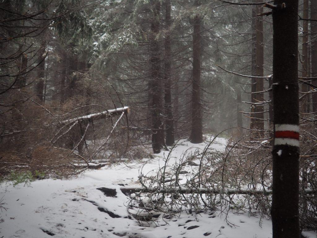 Coraz więcej śniegu