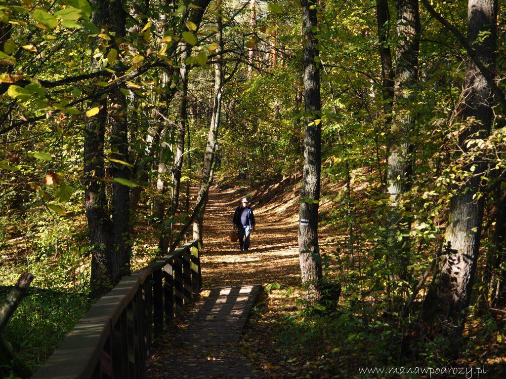 W Kampinoskim Parku Narodowym na czarnym szlaku Truskaw- Palmiry