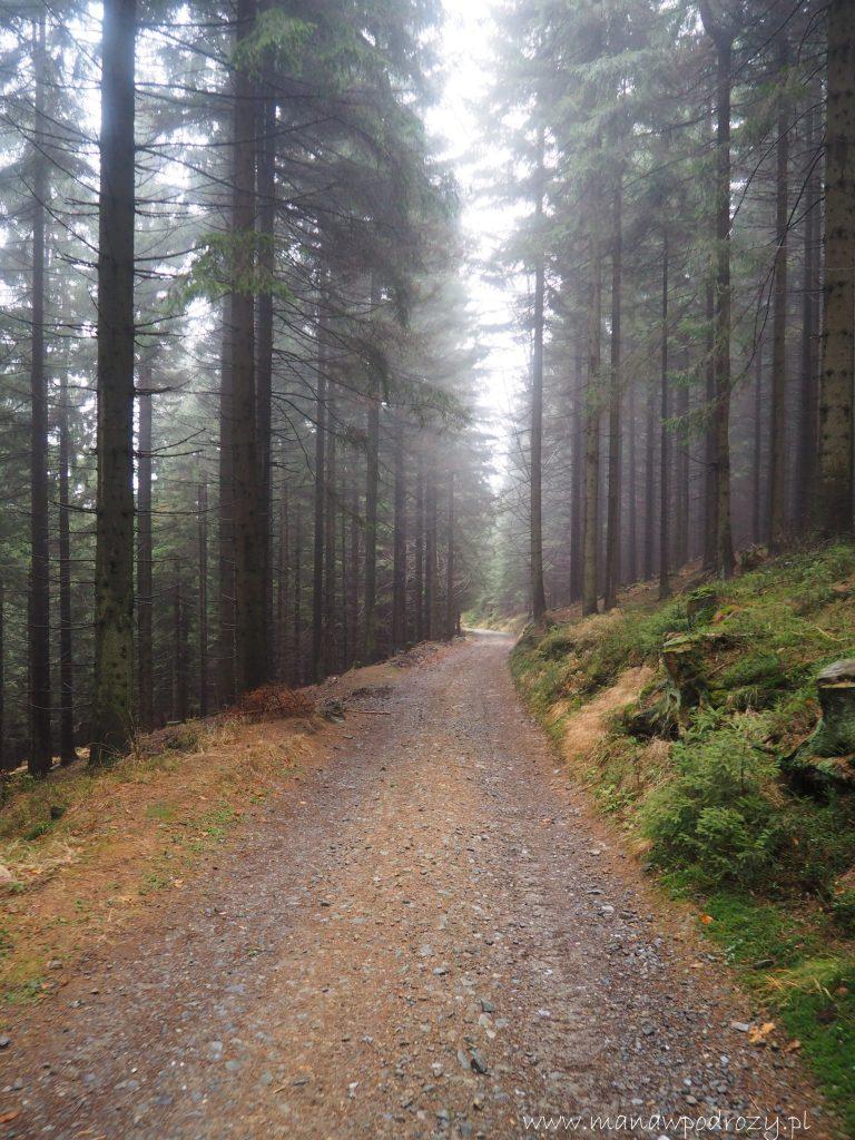 Leśna mglista ścieżka do Ramzovej