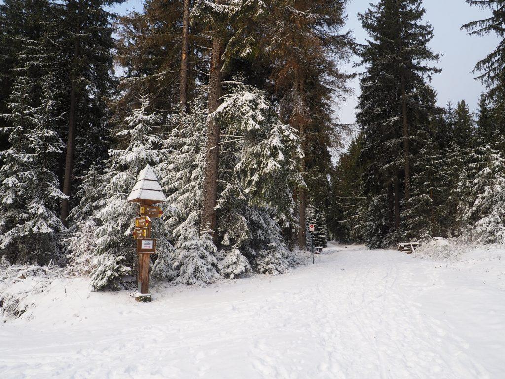 Narciarstwo biegowe w Górach Stołowych