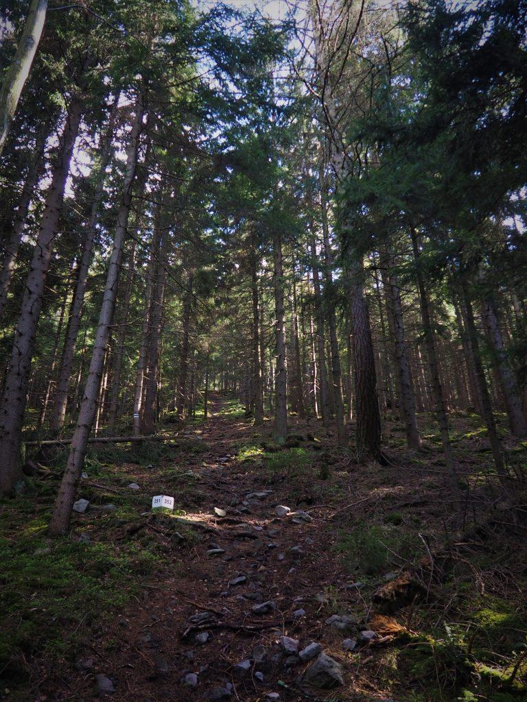 Stroma ścieżka ku szczytowi Wolarza