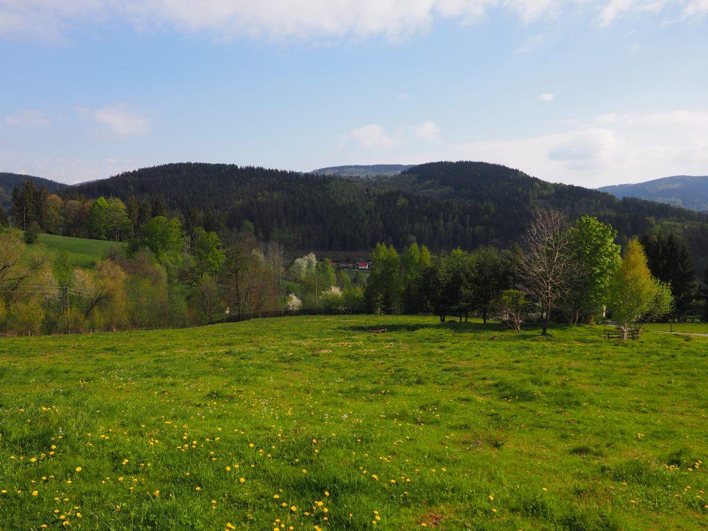 Widok na Wzgóza Wyrębińskie