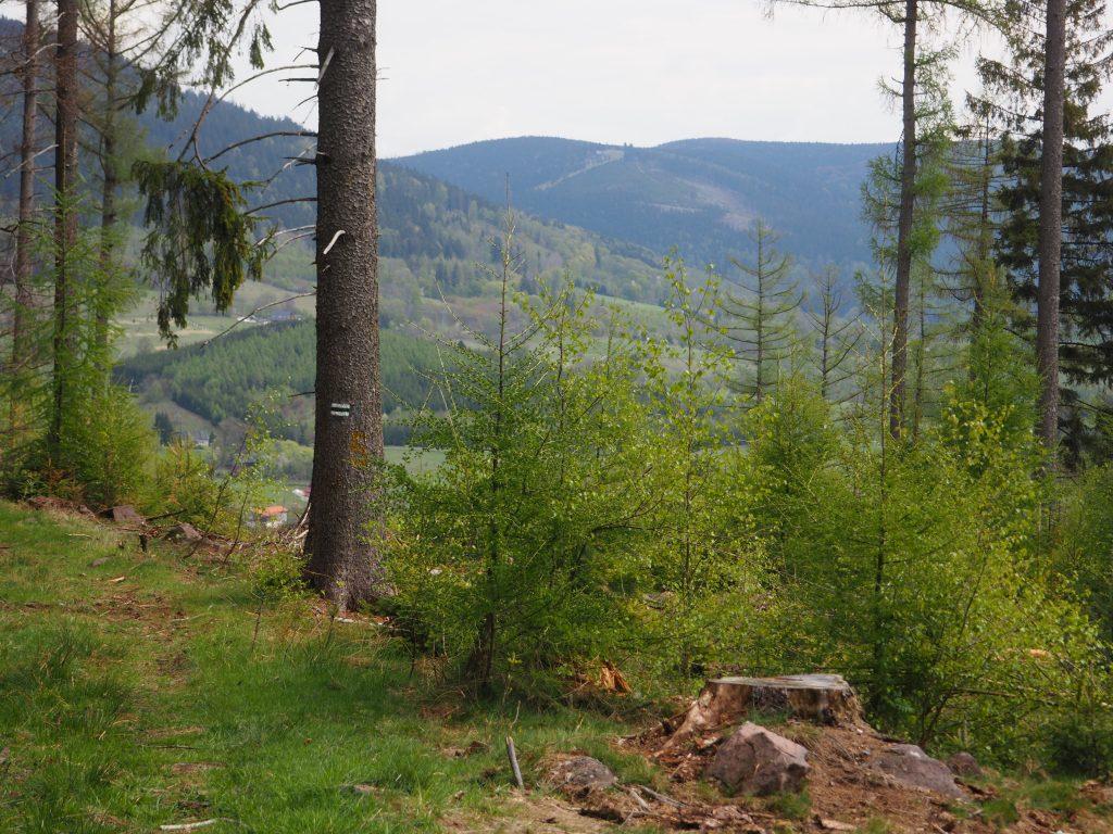 Widok na Sowinę i Góry Sowie