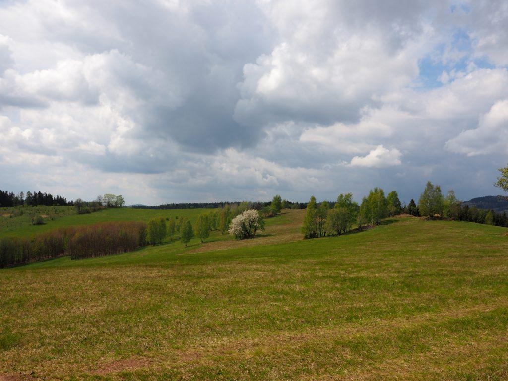 W okolicach Niedrzwicy