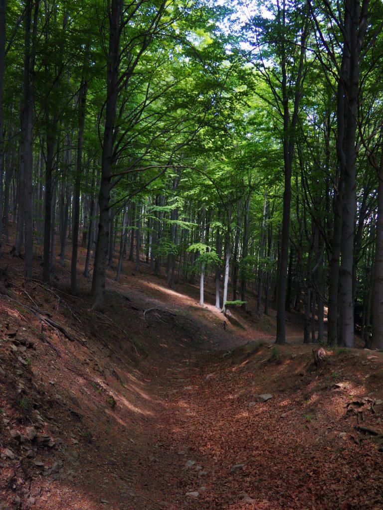Zejście  w kierunku Przełęczy Trzy Buki