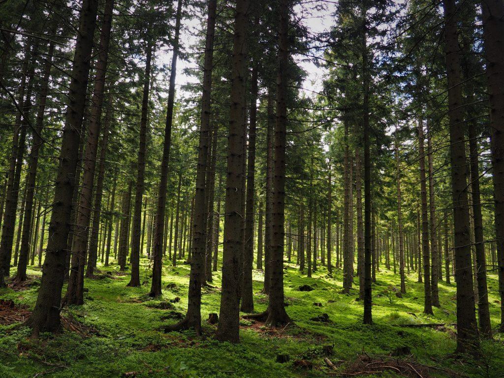 Las wokół formacji skalnych Trzy Siostry